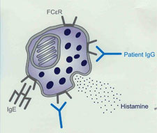 autoimmune diagram